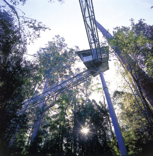 Tourism Tahune Airwalk and Visitors Centre Tasmania Nature Structure